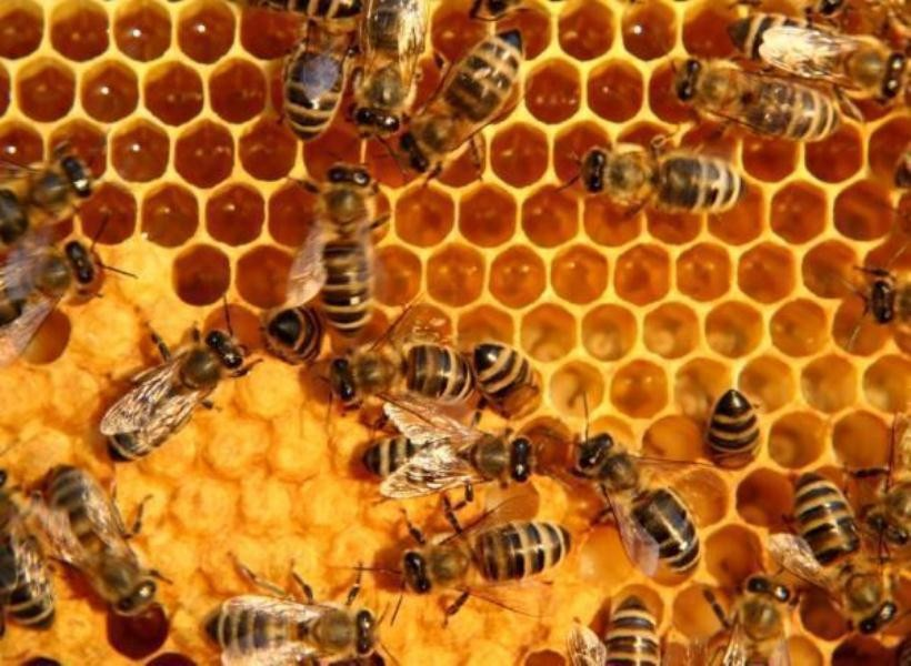 Technical knowhow blamed for low honey production